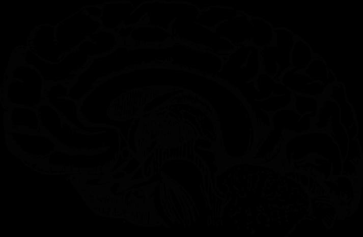 Nutrition linked to growth. Clipart brain brain development