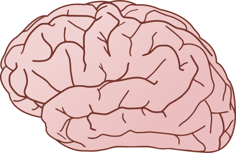 collection of pink. Kids clipart brain