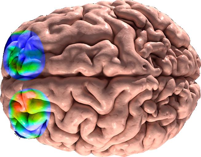 clipart brain cognitive
