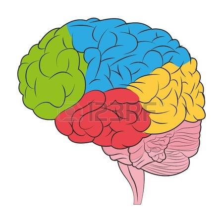 Brain images free download. Mind clipart colorful