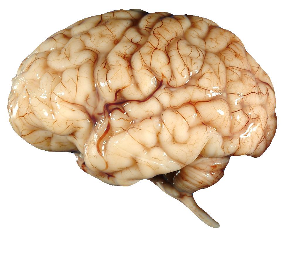 Brains clipart tumblr transparent. Png images free