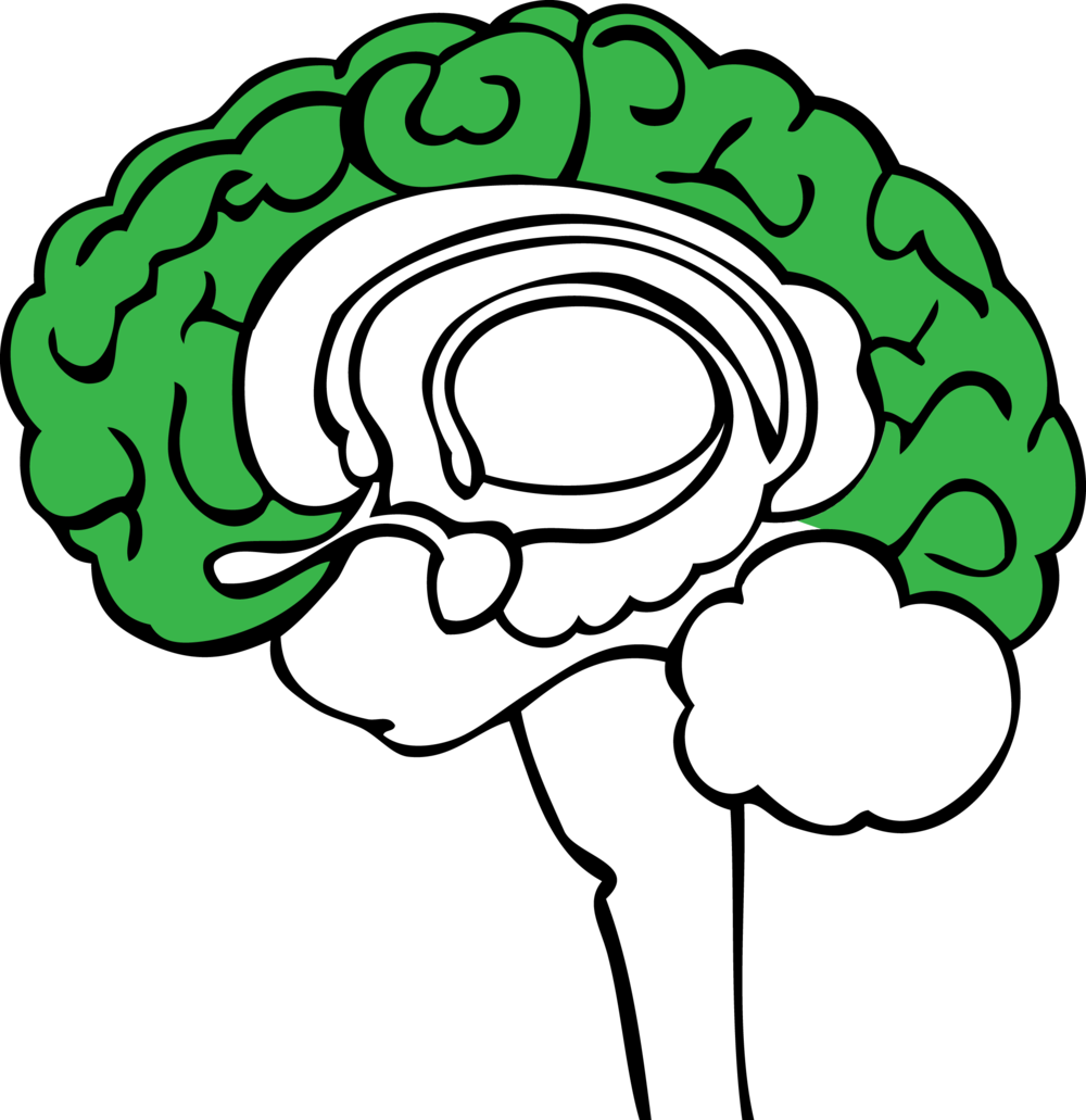 The stoplight approach science. Clipart brain emotion