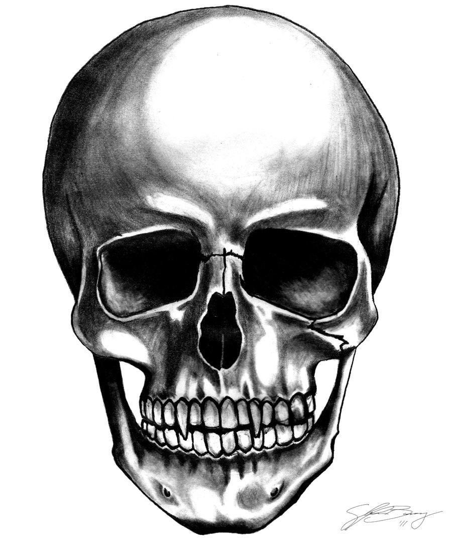 Clipart mouth skull. Skulls png image purepng