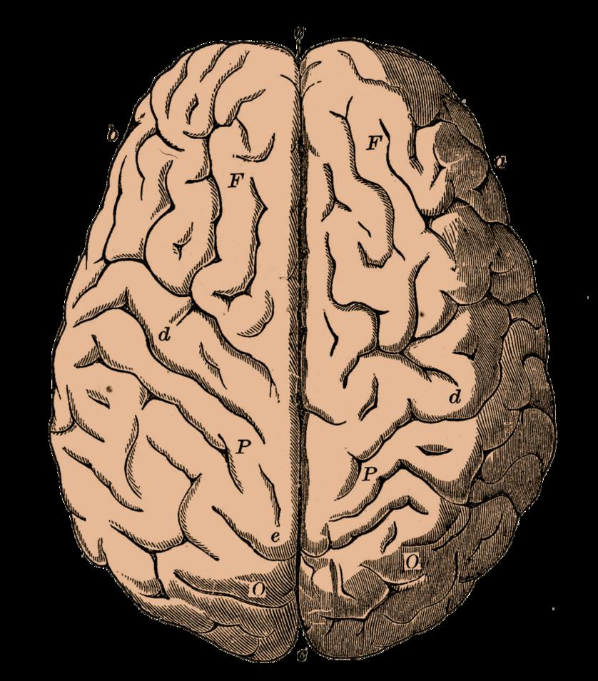 By bsp on deviantart. Clipart brain group
