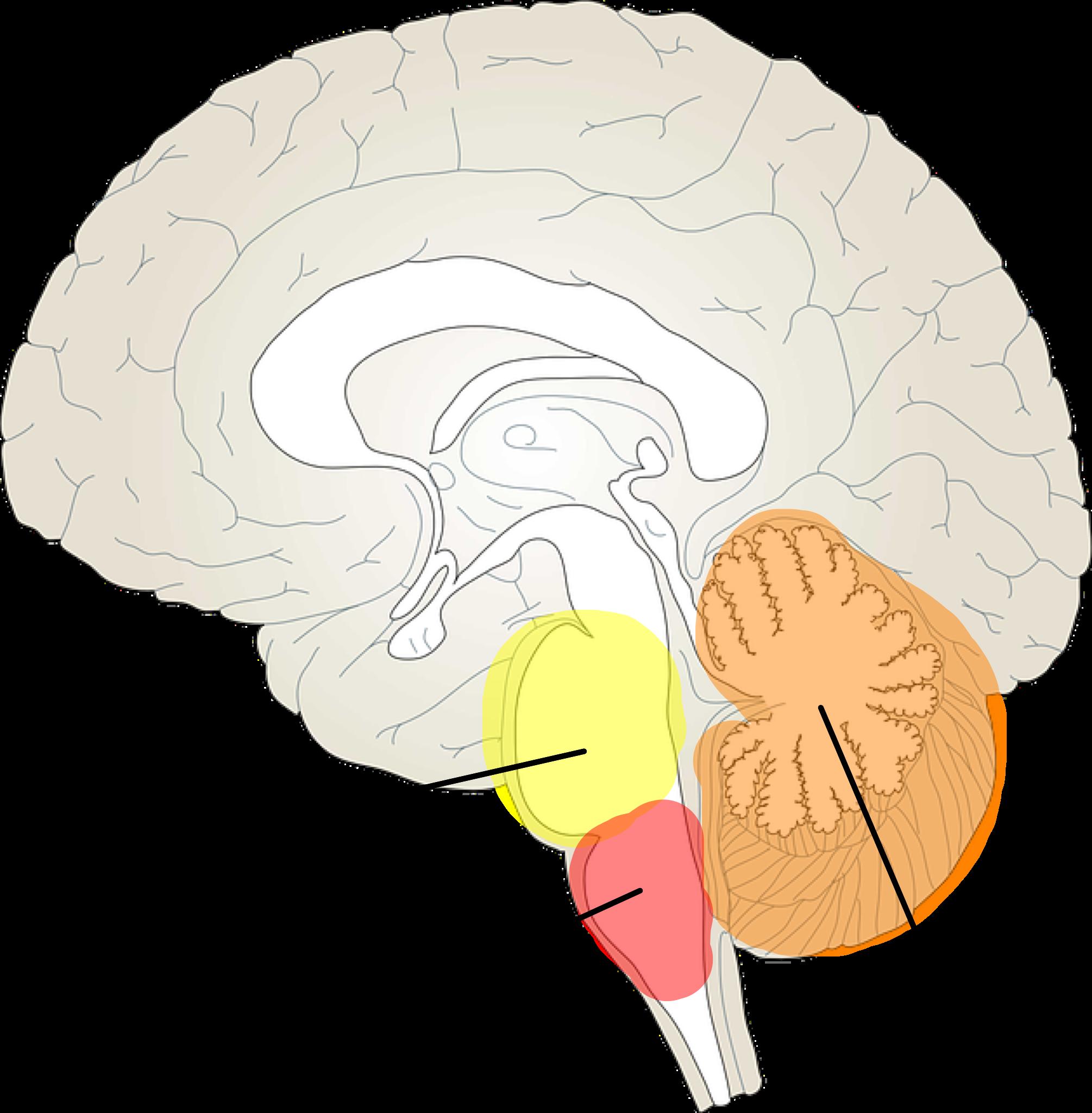 The critical parts of. Clipart brain imagination