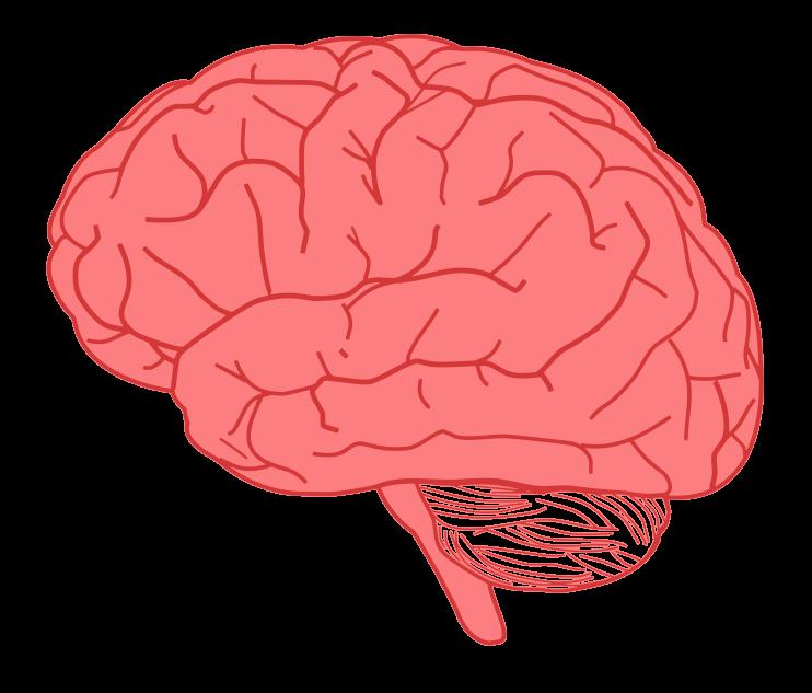 Psychology clipart colorful. Brain clip art black