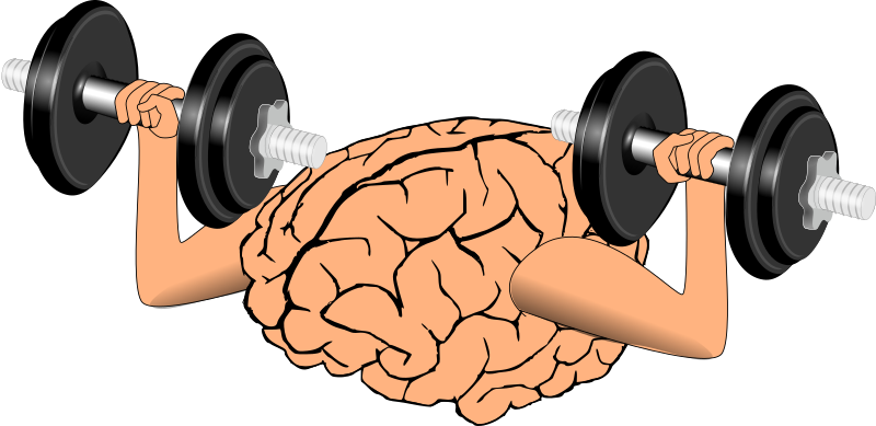 Clipart brain muscle. Training medium image png