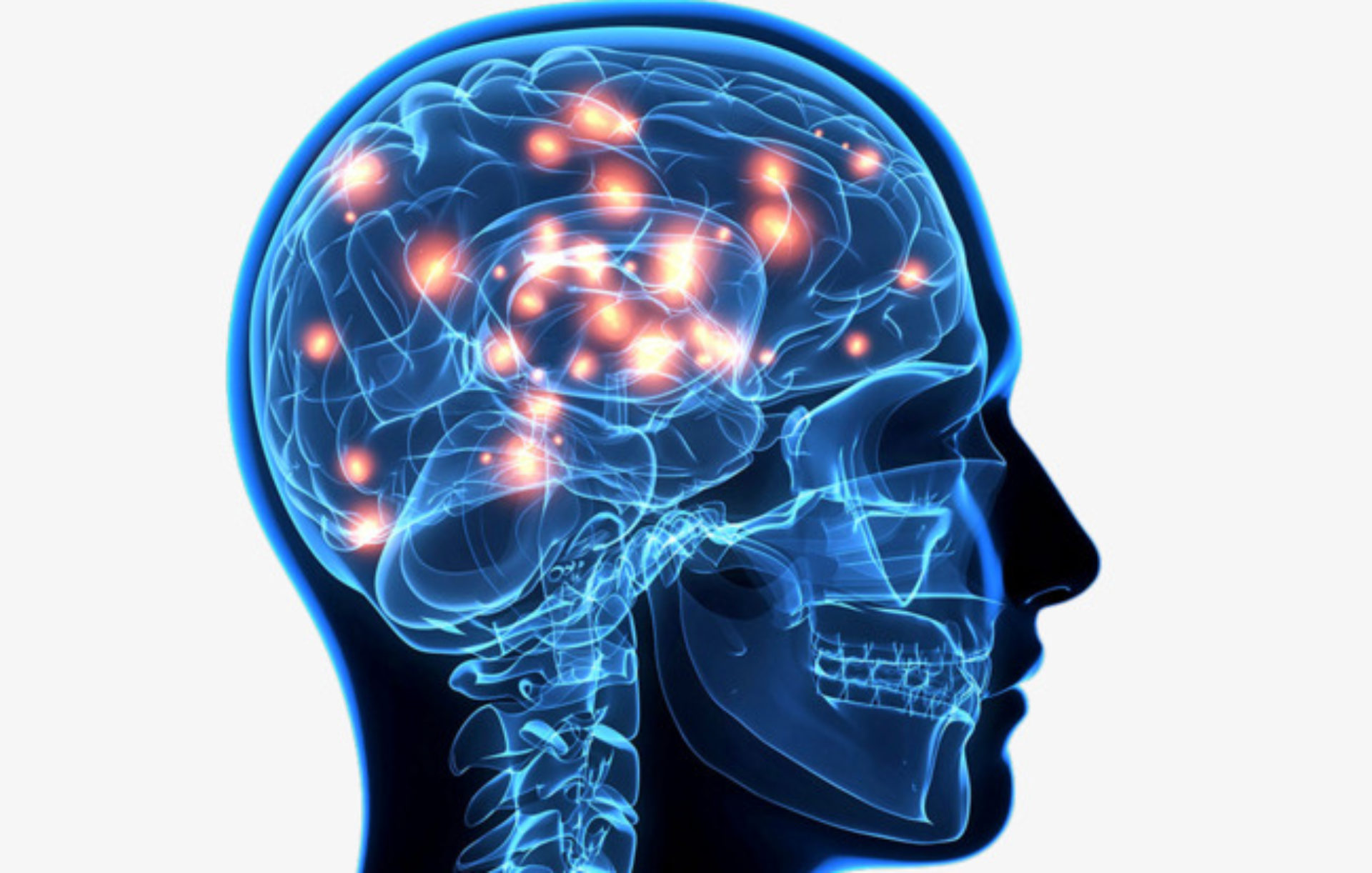 Clipart brain nerve system. Cropped the of human