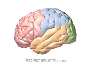 Free nervous cliparts download. Clipart brain nerve system
