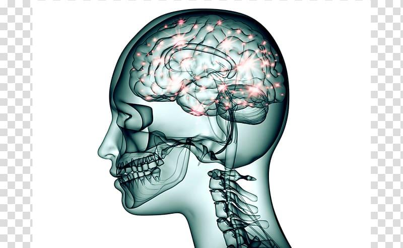 Clipart brain nerve system. Neuron topiramate nervous