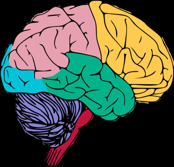 clipart brain neurosurgery