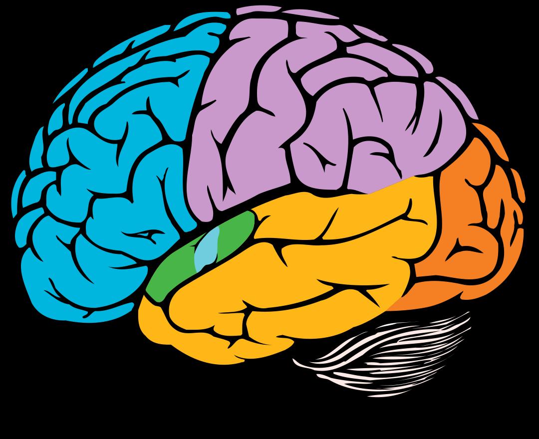 Taste clipart brain. Dementia australia in my