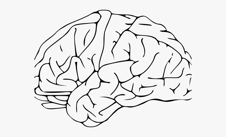 Image transparent background . Clipart brain pdf