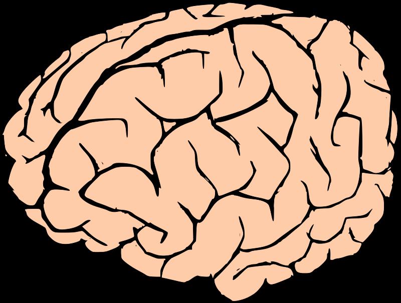 Clipart brain pdf. Medium image png