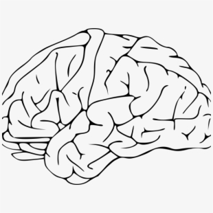 Clipart brain pdf. Image transparent background