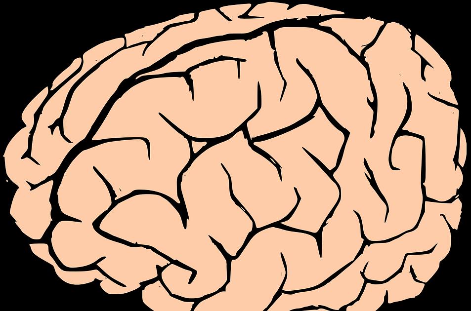 Vykruta daily . Clipart brain tool