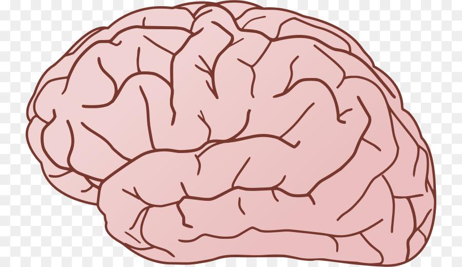 Free content clip art. Brain clipart