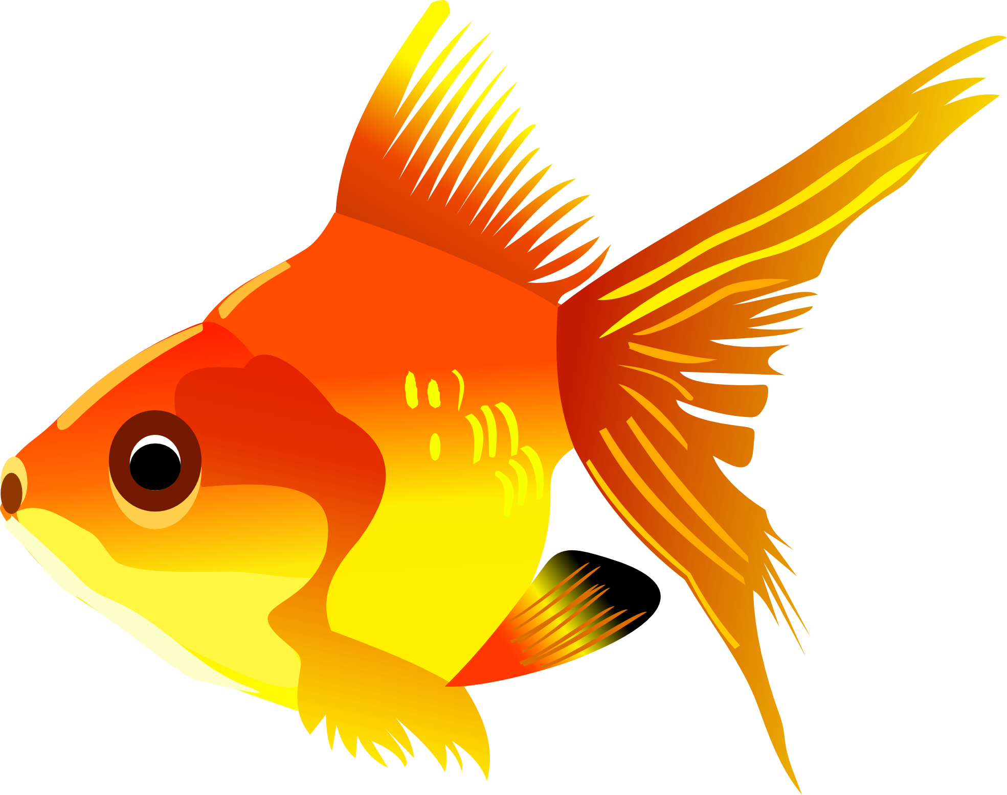 Tuna clipart fish gill. Fifteen isolated stock photo