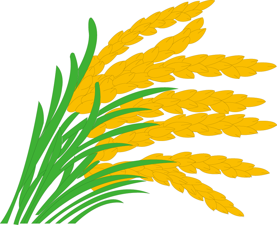 Paddy field grasses clip. Rice clipart rice leaf