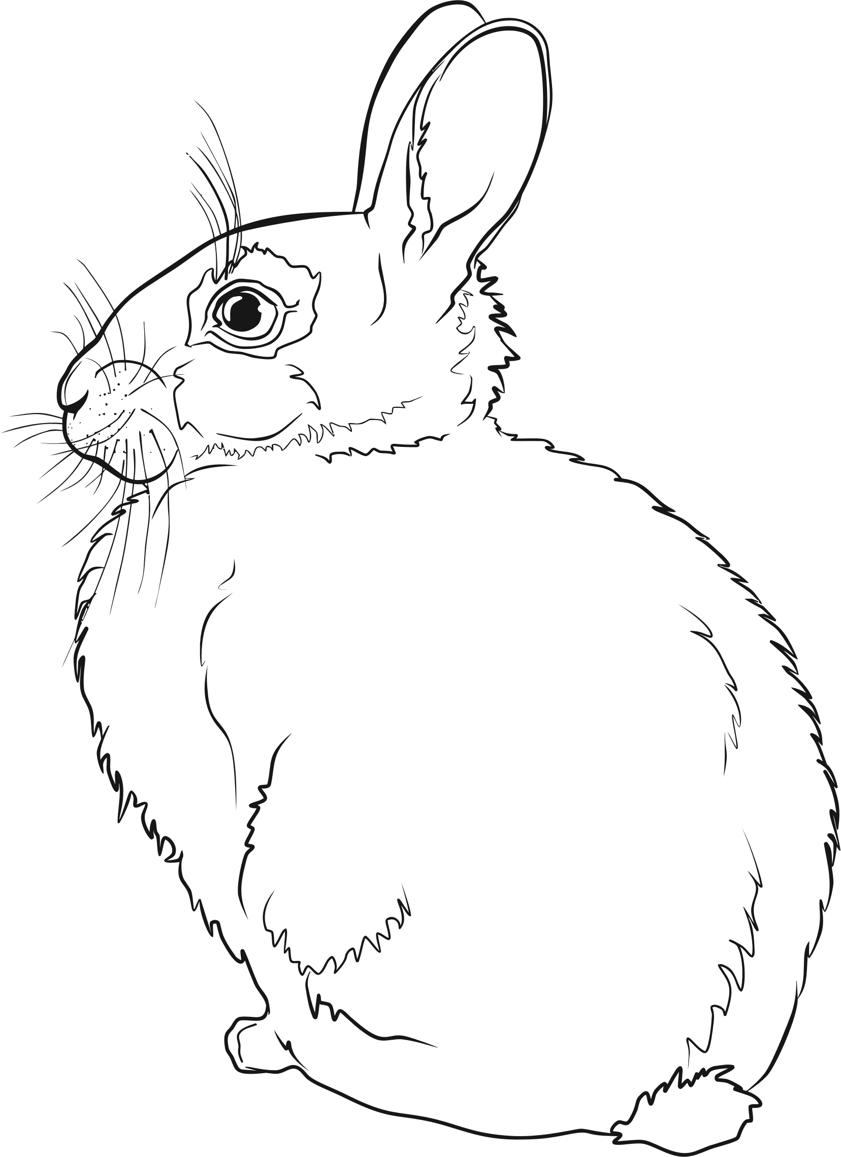 Clipart rabbit line art. Hare drawing at getdrawings