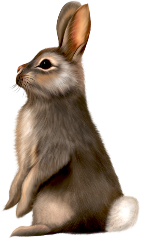 Painted bunnies clipartix. Clipart bunny forest