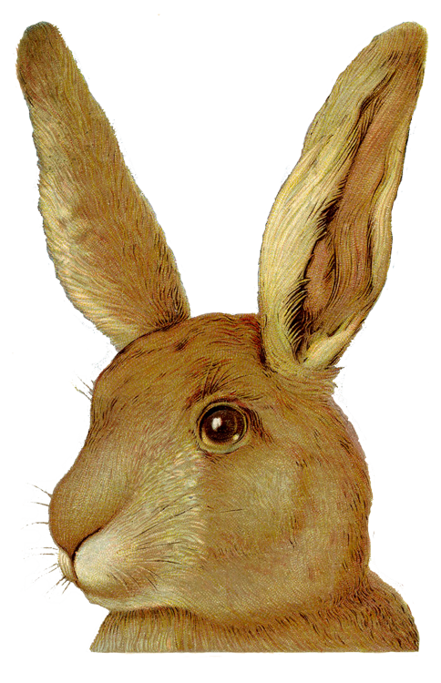 Clipart bunny forest. Clip art animals pinterest