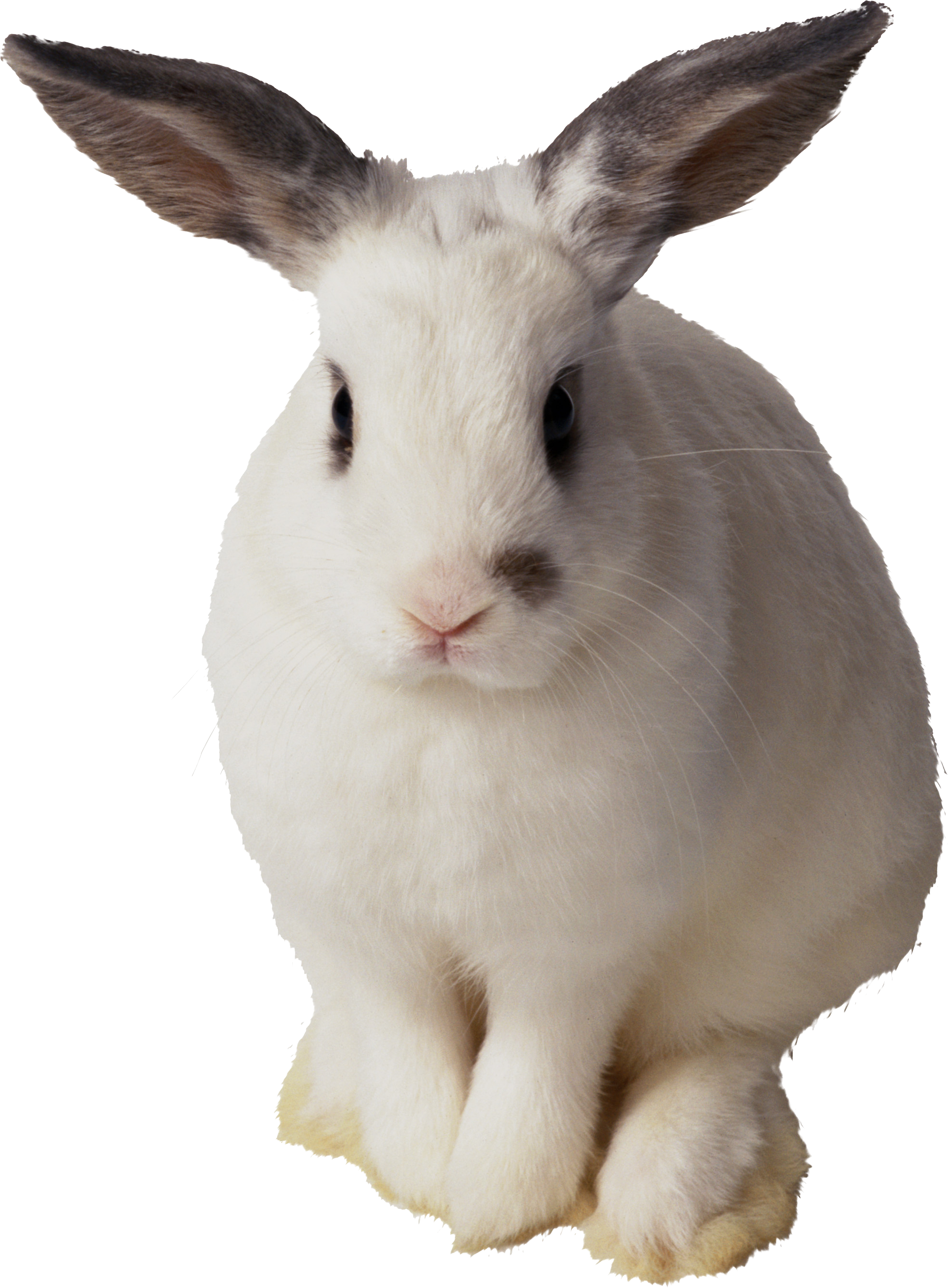 Hunter clipart rabbit hunting. White png image photos