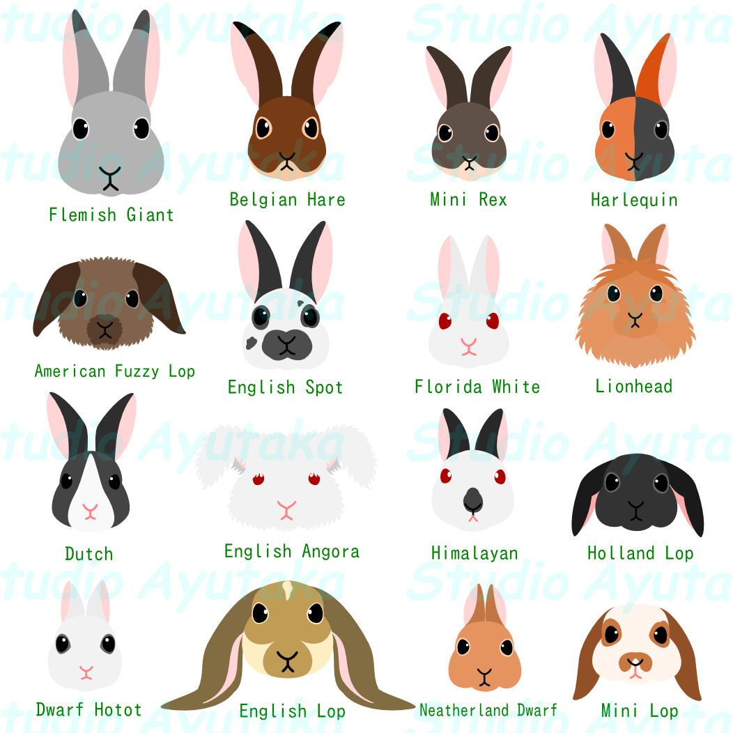 Head set with breed. Clipart bunny hipster