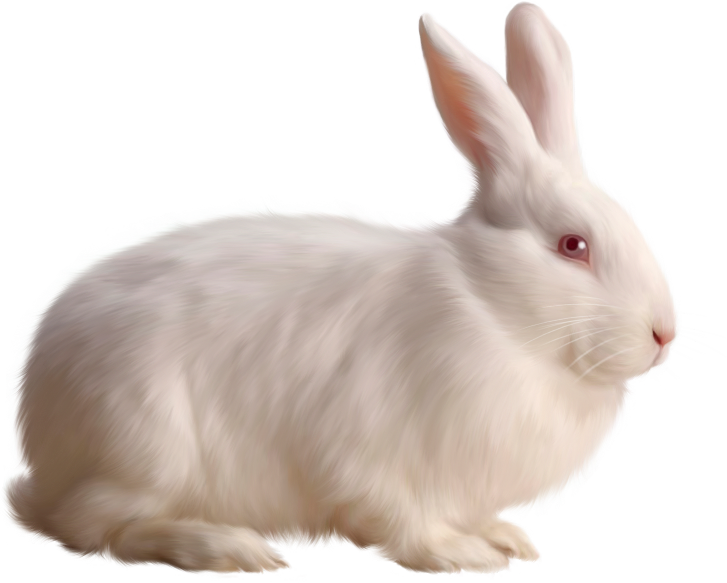 Clipart bunny holland lop. White rabbits group transparent