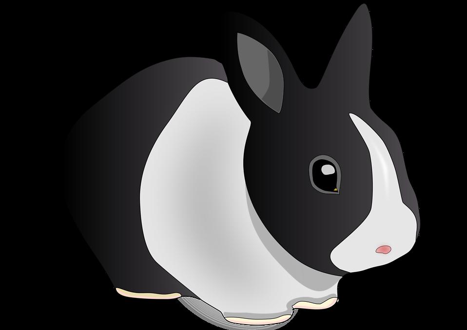 Clipart bunny mini lop. Bunnies transparent background frames