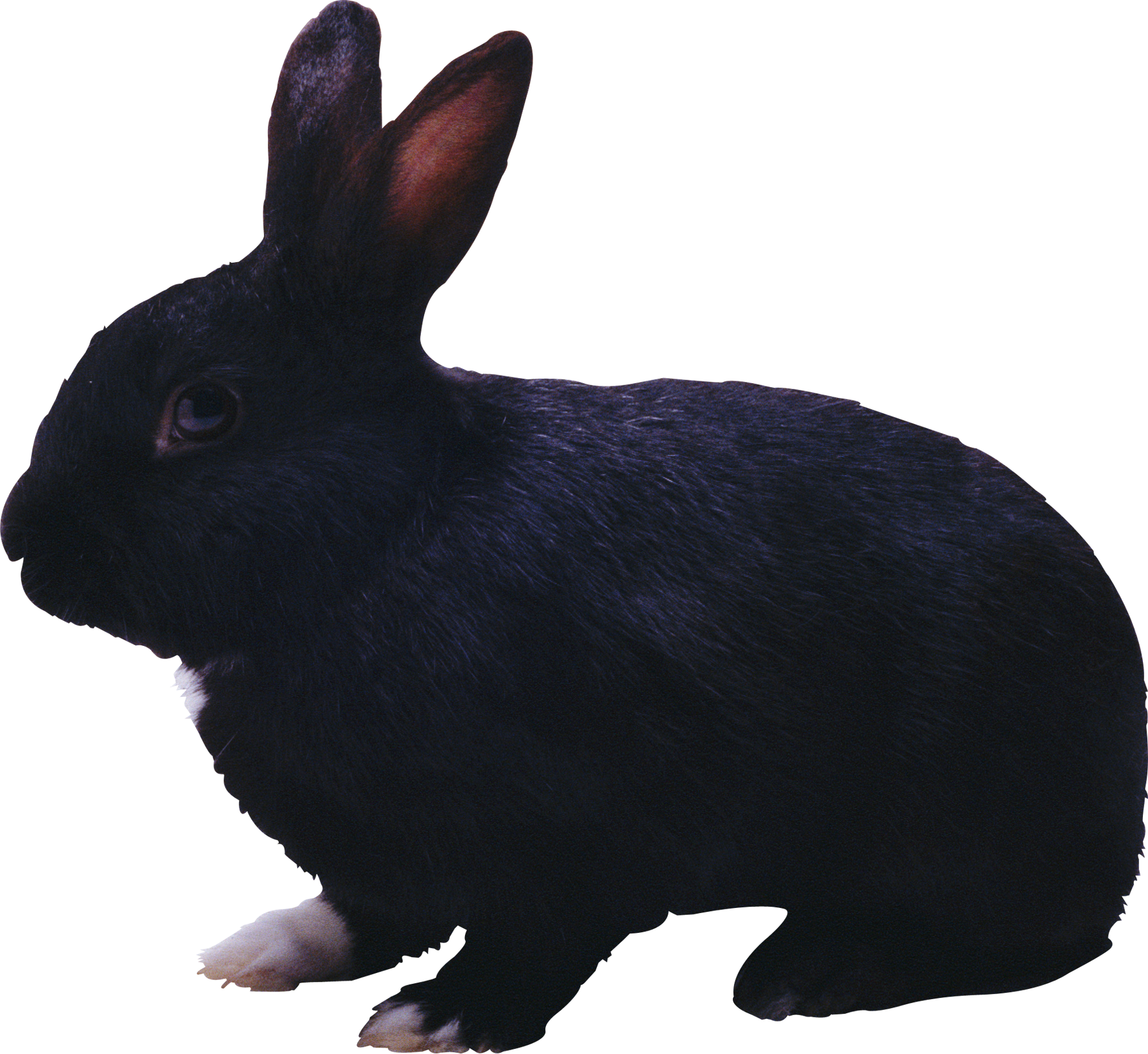 Clipart bunny mouth. Black rabbit png animal