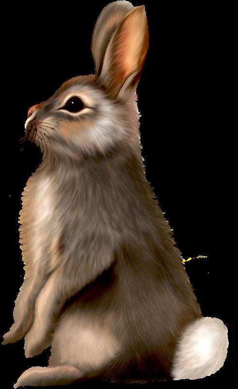 Bunny realistic. Clipart rabbit transparent free
