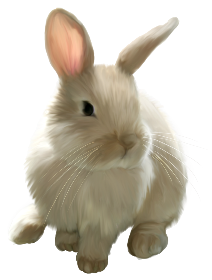 Cute png picture gallery. Clipart bunny painted