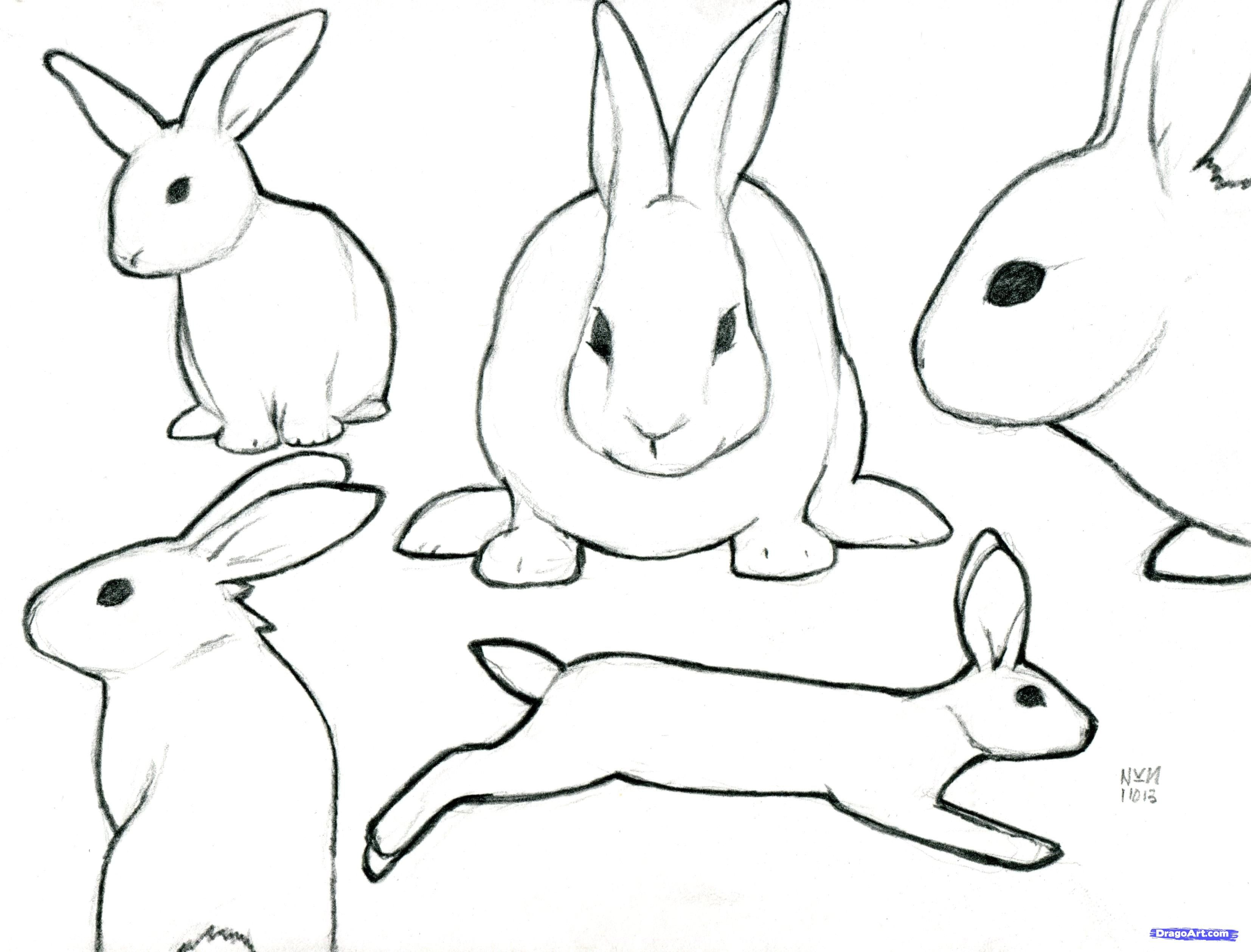 drawing for free. Clipart rabbit profile