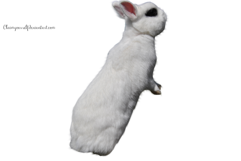 White Rabbit PRECUT PNG Stock by ClaimYourself on deviantART