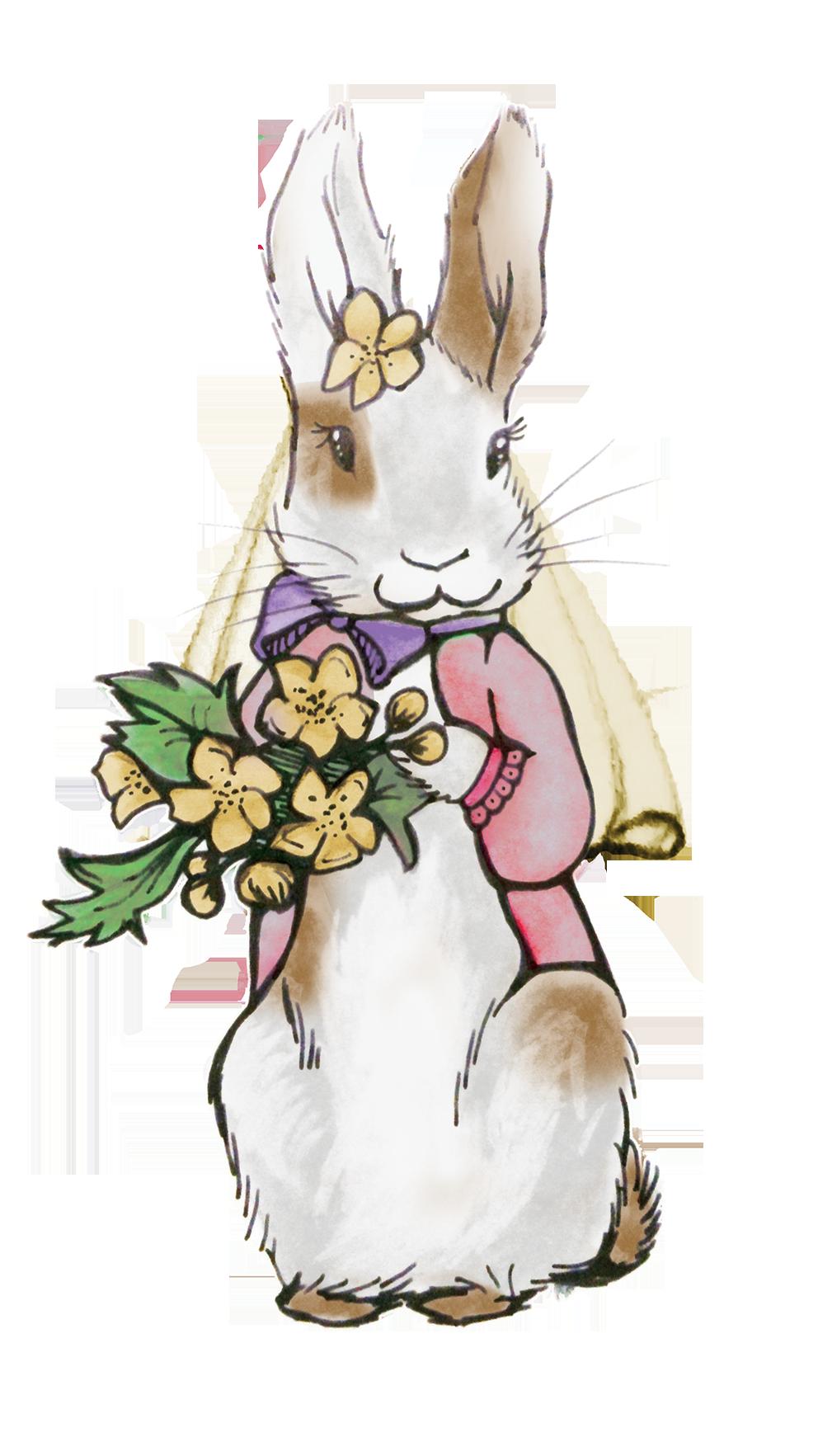 rabbit cartoon rabbits and hares hare snowshoe hare clipart - Rabbit,  Cartoon, Rabbits And Hares, transparent clip art