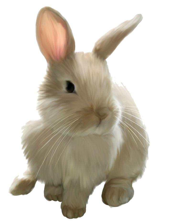 Png images transparent download. Free clipart rabbit