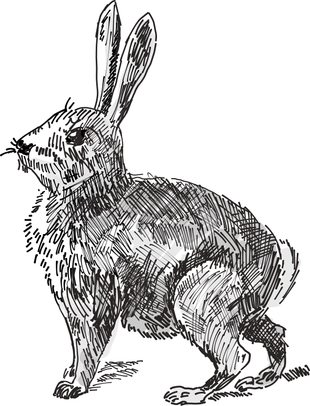 Medium image png . Clipart bunny wild rabbit