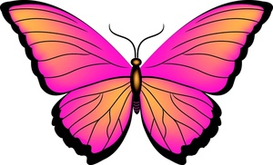 Pink panda free images. Clipart butterfly