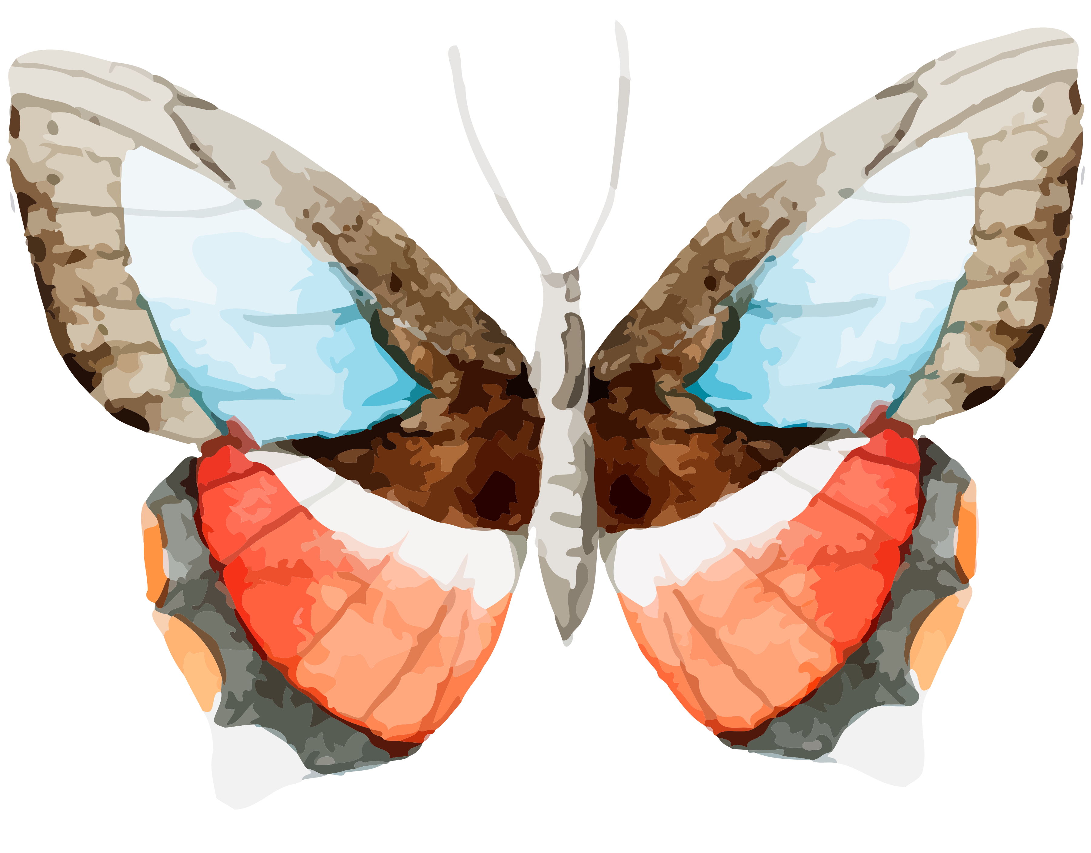 clipart butterfly 4th july