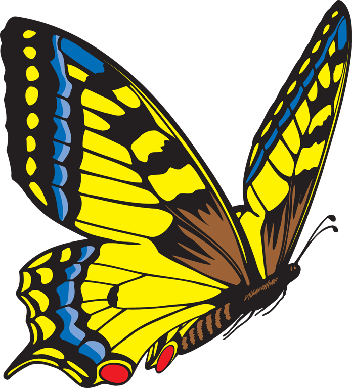 Clipart butterfly. Yellow panda free images