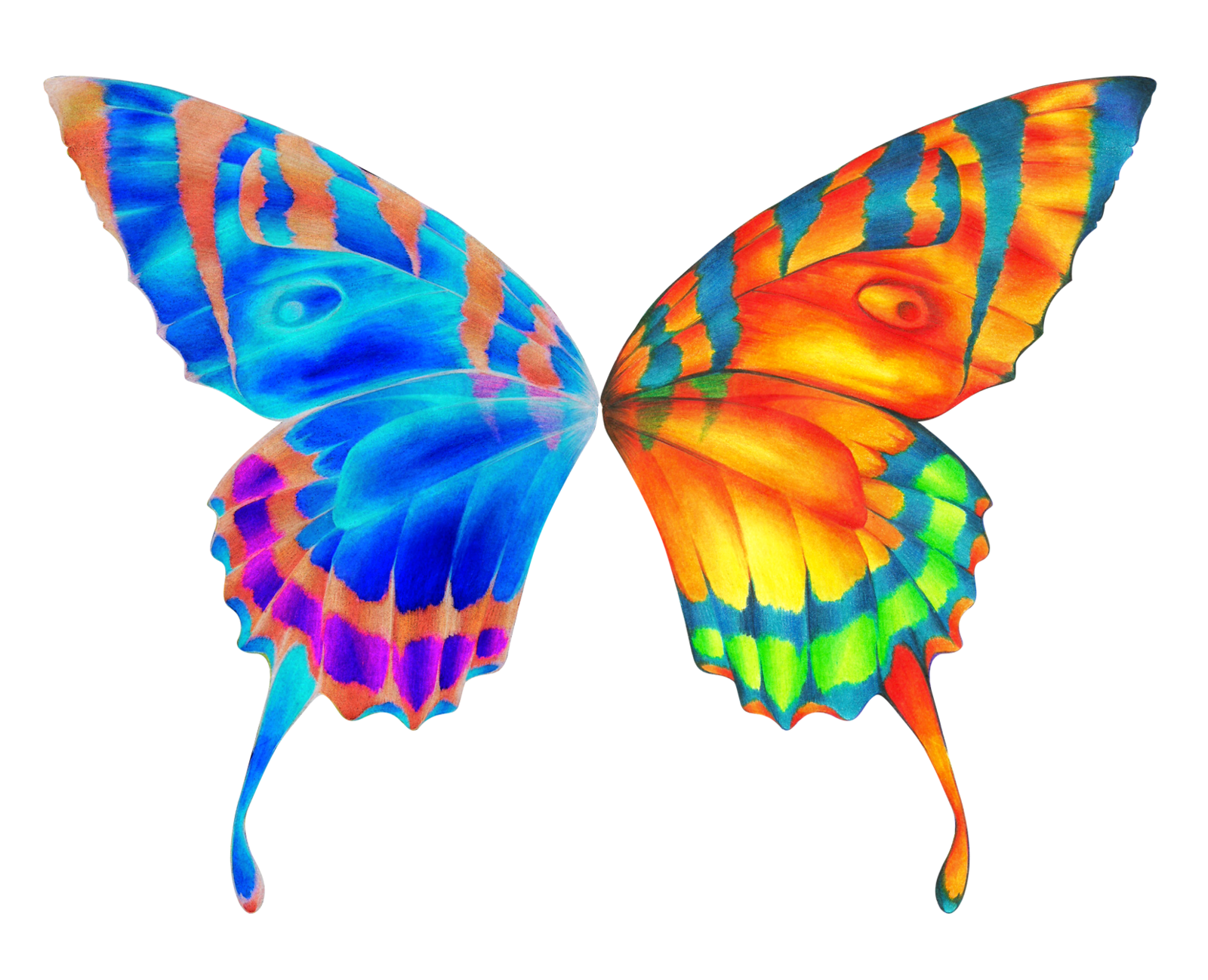 collection of butterfly. Wing clipart colorful