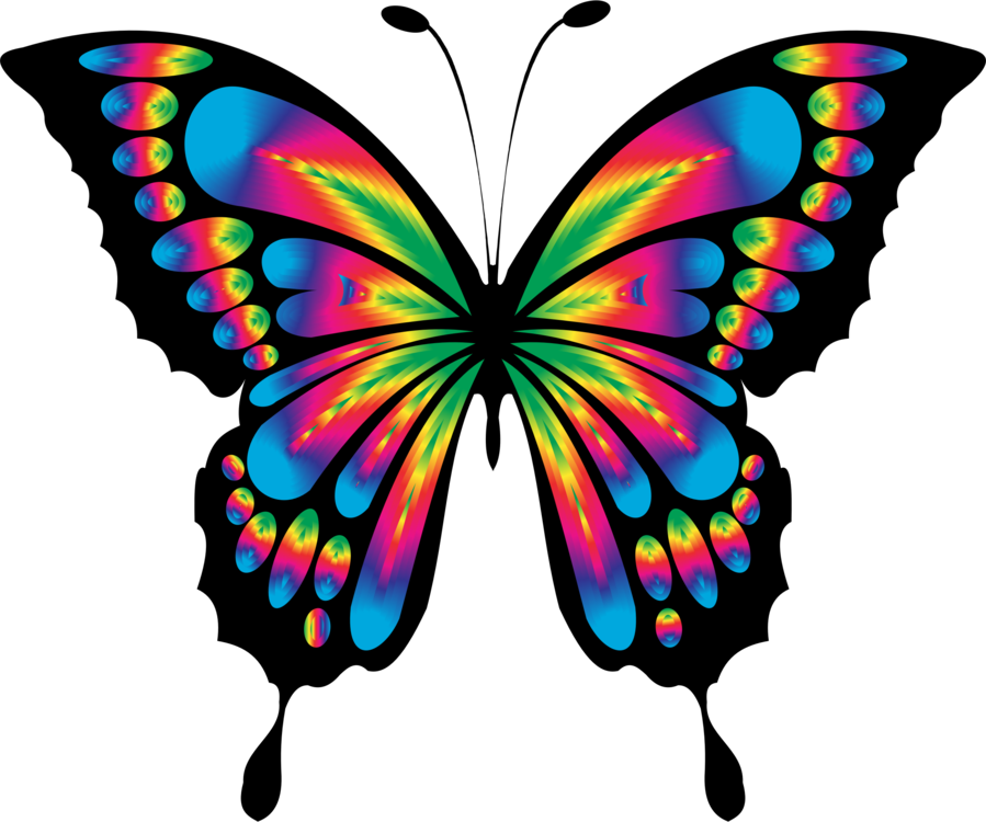 Symmetry artwork png royalty. Clipart butterfly art