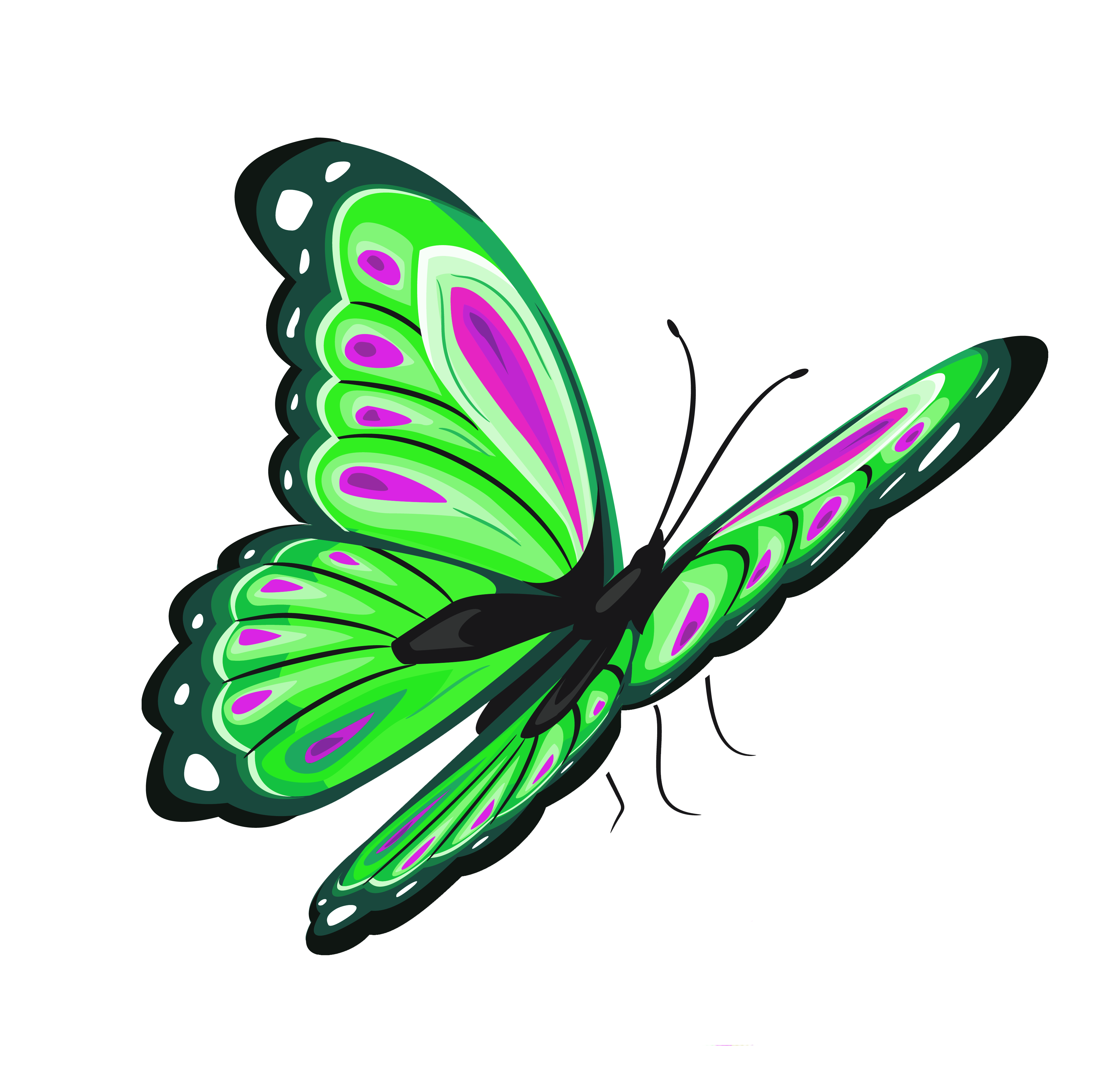 Clipart butterfly banner. Green and pink png