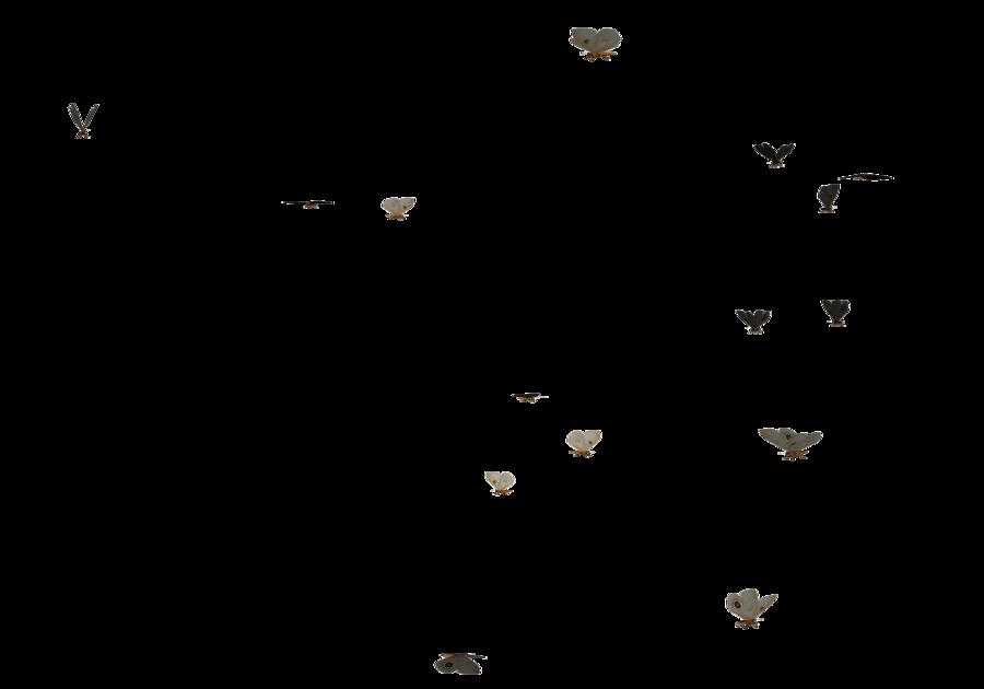 clipart butterfly bunch