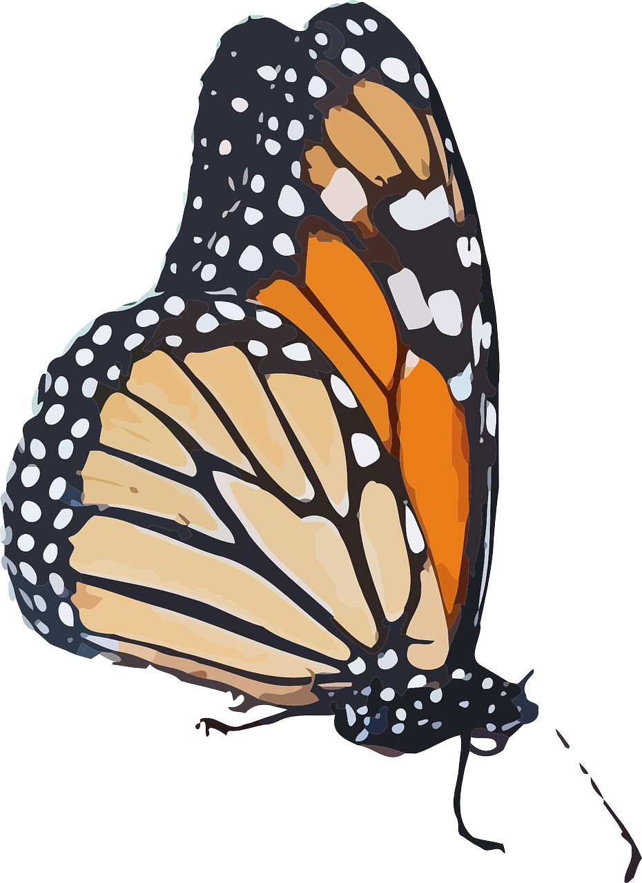 Clipart butterfly burgundy. Pin by barbara robbins