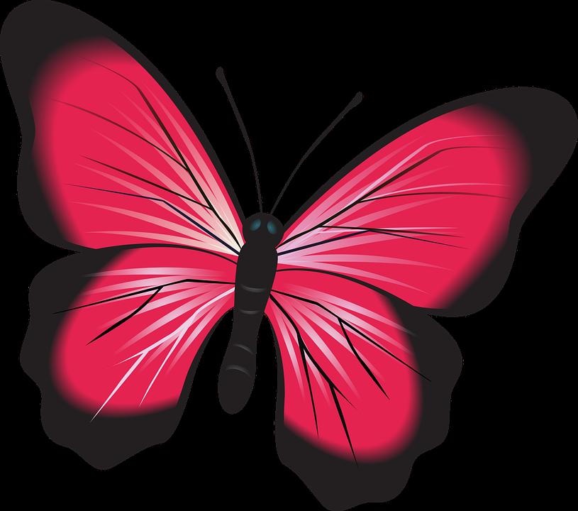 Imagini pentru fluturi rosii. Clipart butterfly burgundy