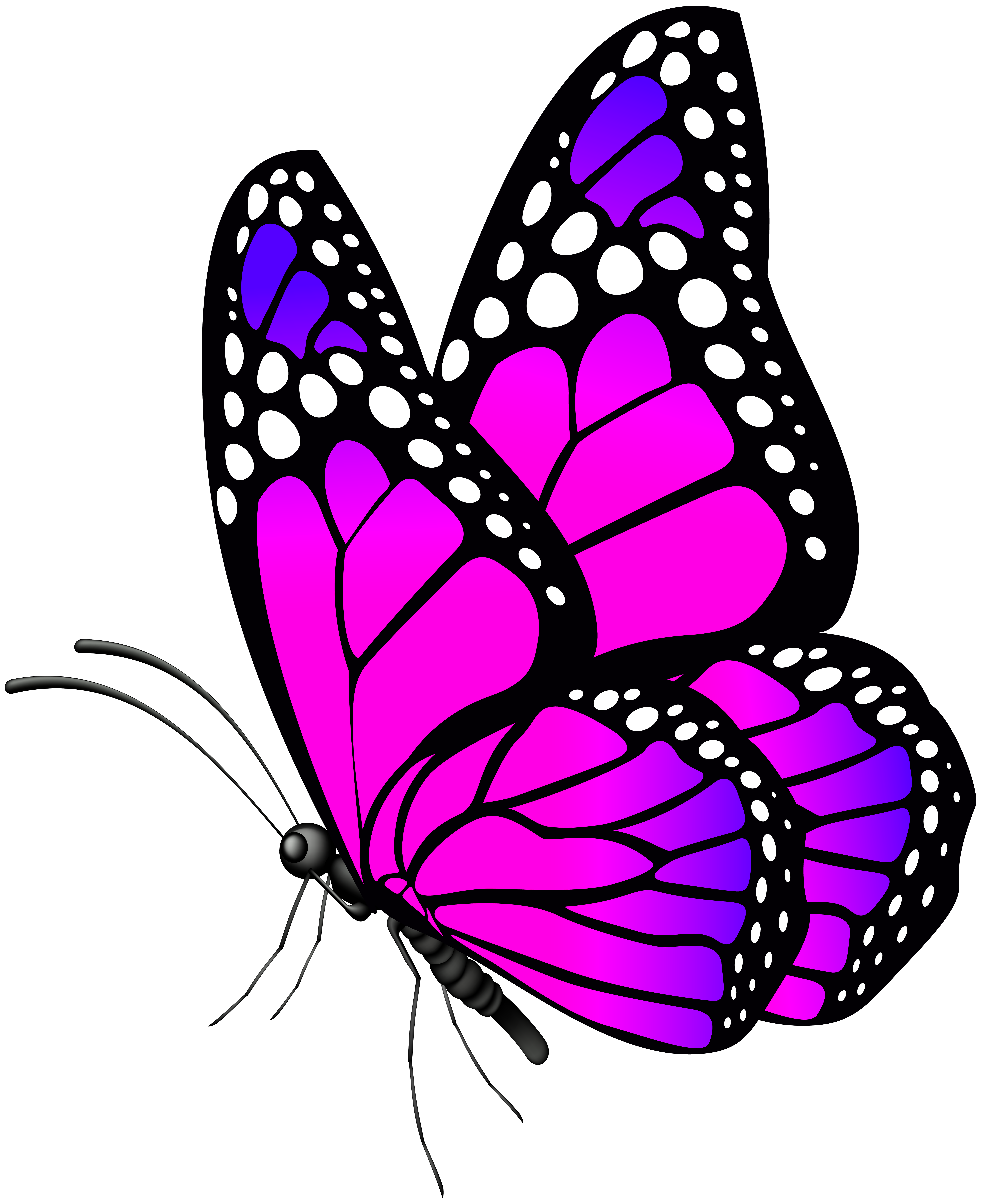 Moth clipart brown pink. Butterfly png clip art