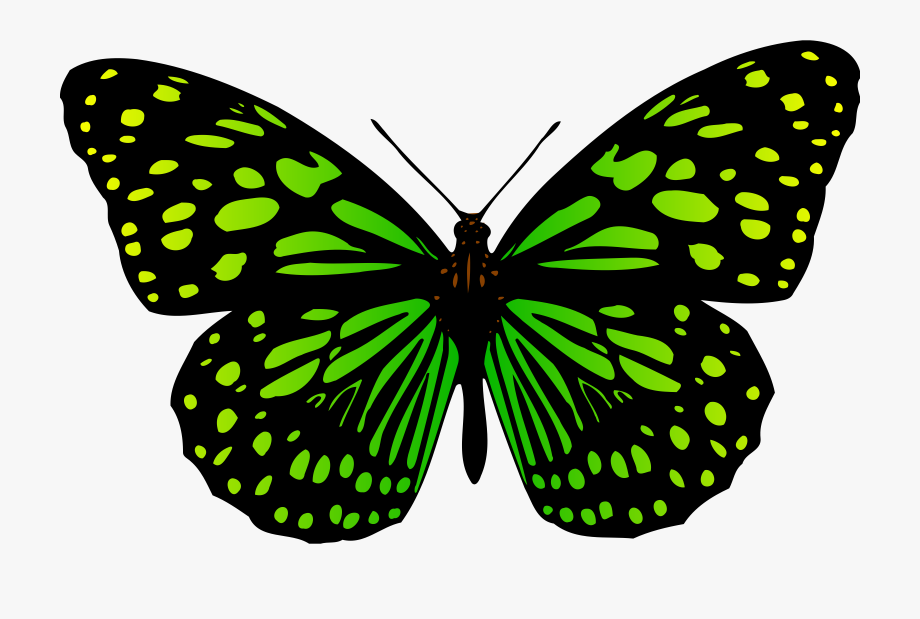 Clipart butterfly colour. Big image png free