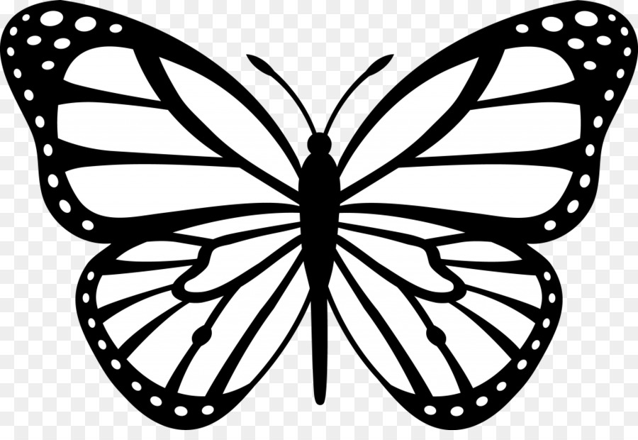 Black and white color. Clipart butterfly colour